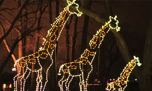 Lincoln Park Zoo's Light-Up Animals